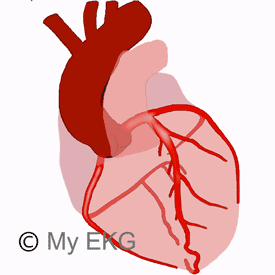 Coronary Arteries Anatomy